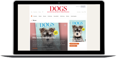 dogs-magazin.de